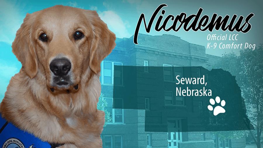Nicodemus Comfort Dog